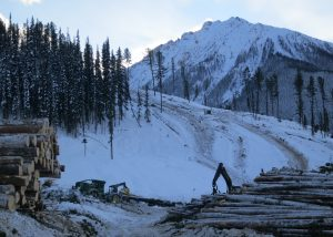 Forest Operations: Avalanche Safety Plan, Avalanche Risk Assessments and Avalanche Safety Program(s)